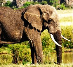 4 Day Kruger Safari