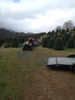Fresh trees from North Carolina 2013