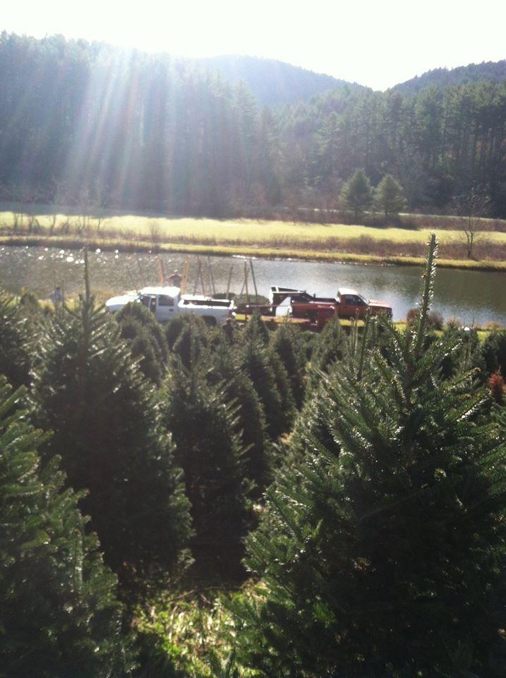 Fresh trees from North Carolina 2014