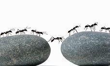 개미.jpeg