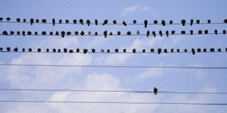 birds_as_we_are.jpg