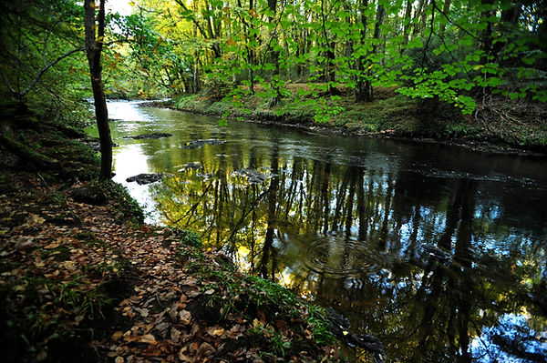 Reflections in the River Dart at Hembury