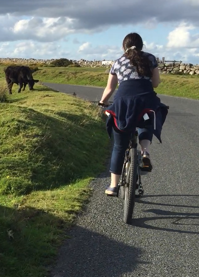 cycling with cows on Dartmoor.png