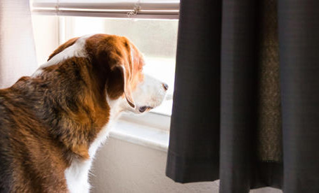 Lockdown shows us what it's like to live a Dog's life: Trainer explains.