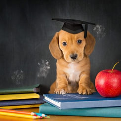 puppy-school-osver3p2g79fckthge2ollkog58