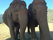 Elephant Nature Camp