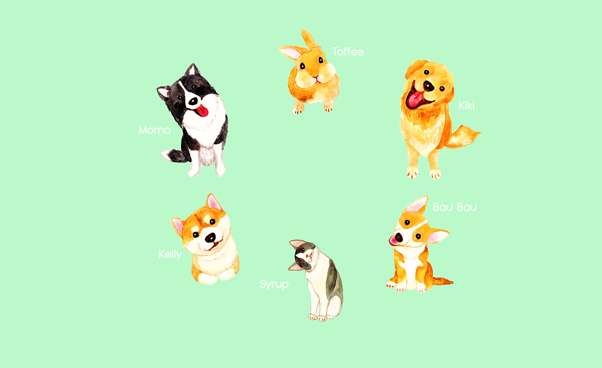 golden retriever borde collie corgi shiba inu dog rabbit bunny cat