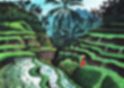THE RICE TERRACE.jpg