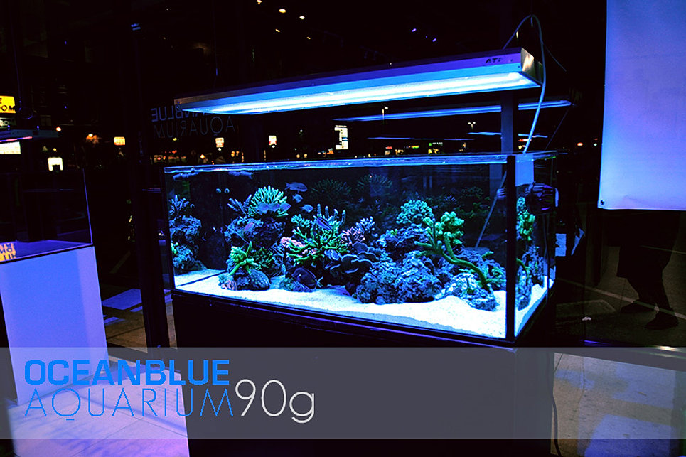 90 Gallon Used Rimless Aquarium For Sale Les Baux De