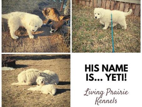 His Name Is Yeti!