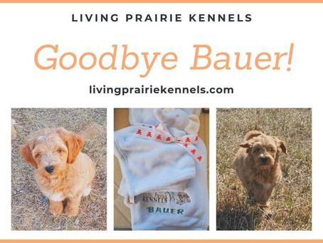 Bauer's Blanket!