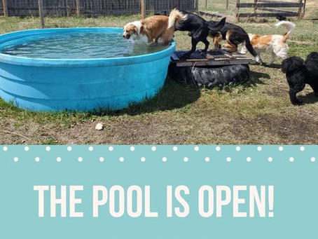 The Pool Is Open!