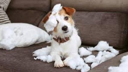 Bad Puppy.jpg