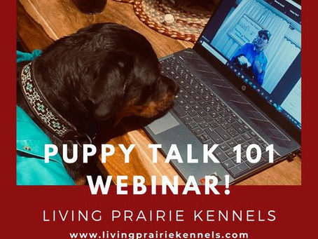 New Month, New Puppy Talk Webinar!