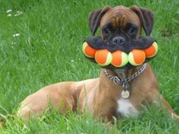 dogs-playing-fetch.jpg