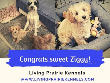 Ziggy Meets His Family!