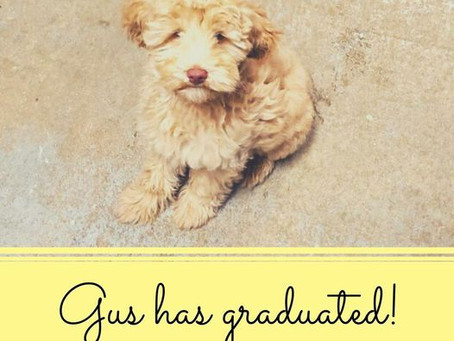 Puppy Boot Camp Grad!