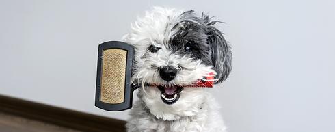 choosing_right_brush_dog_2000x786.png
