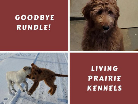 We will miss little Rundle!
