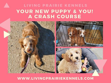 Crash Course For New Puppy Owners!