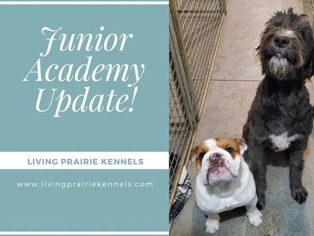 Our First Junior Academy Pups!