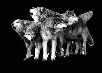 wolves-clip-art-png-clip-art-thumbnail_e