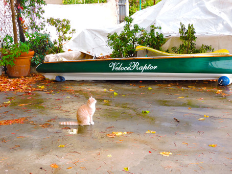 The Positano Diaries- Entry 3: The Cats