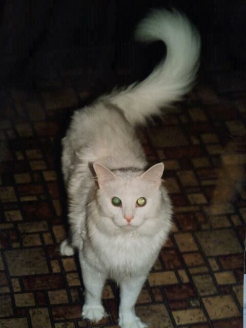 My childhood cat, Harry