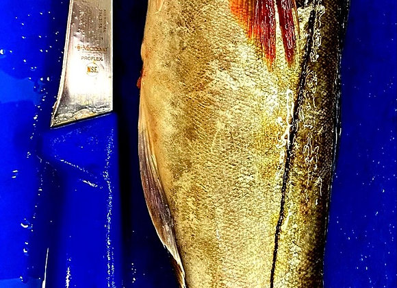 Cornish Haddock Fillet