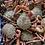 Thumbnail: Cornish King Crab (Cooked)