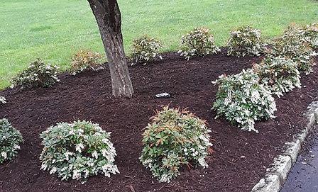Tree & Lawn Care