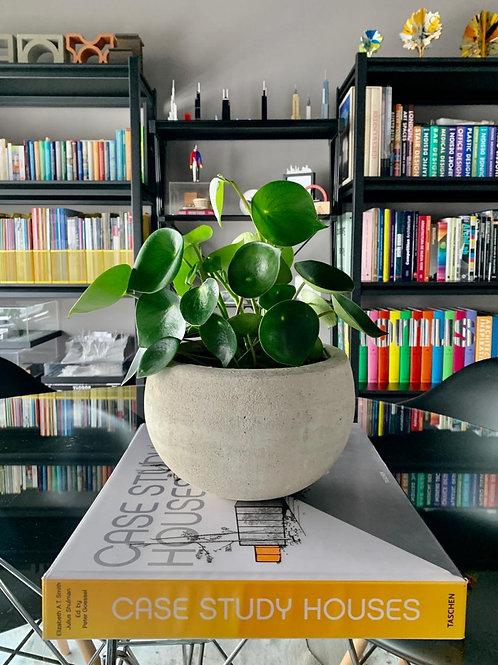 Bowl con planta