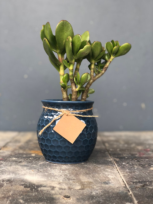Mielera en ceramica, azul petróleo