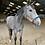 Thumbnail: Licols chevaux