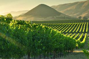 Santa Barbara, Goleta, Montecito & Summerland Wine Tasting