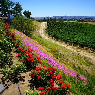 Rancho California Wine Trail