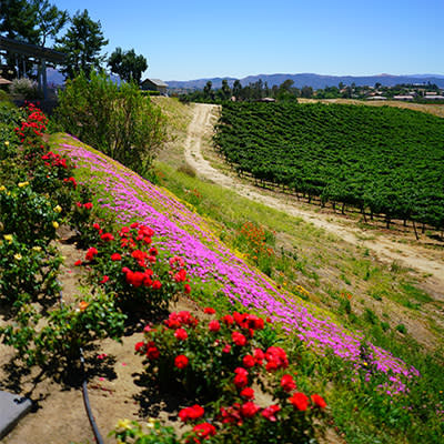 Rancho California Wine Trail