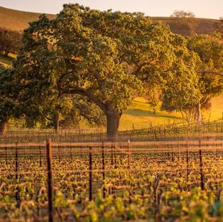 12 Best Santa Barbara Wineries to Visit (Wine Country)