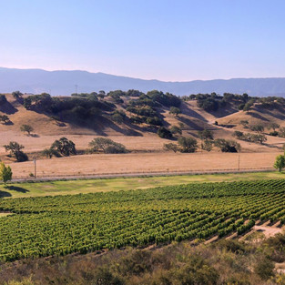 Santa Barbara County Wines