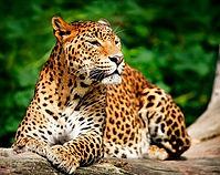 yala-national-park1_edited.jpg