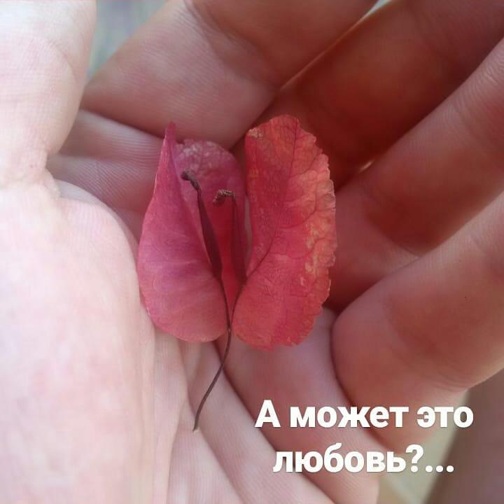 Alex Vestarh: А может это любовь?...