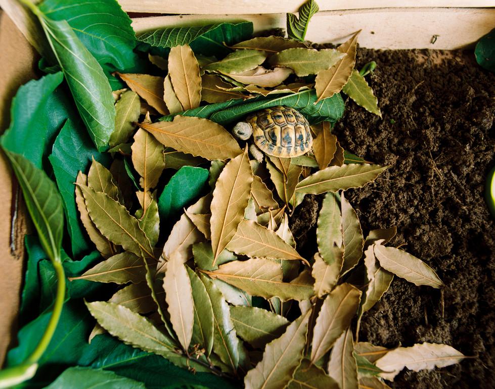 La foglia e la tartaruga