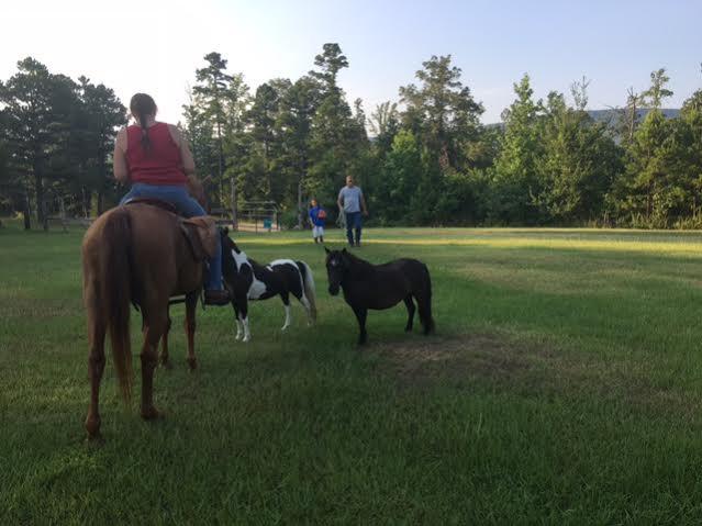 mini pony rental talimena