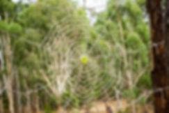 hayward533x800x72.jpg
