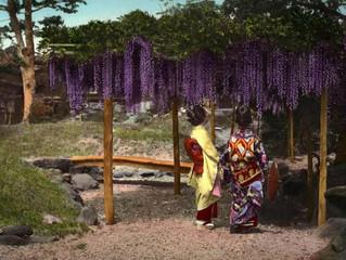 FUJI, FILLE DU JAPON