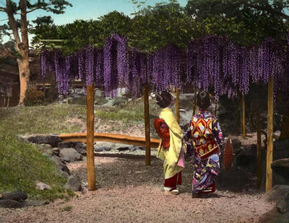 """""""Two women admire wisteria blossoms"""", ca. 1890s. Genkyu-en Garden (玄宮園) in Hikone near Kyoto. Hand-colored Salt Print by an unknown Meiji-era photographer. Genkyu-en Garden is a Japanese chisenkaiyu-style (池泉廻遊) garden (with a path meandering through the garden around a central pond). It was built on the grounds of Hikone Castle in 1677. (Okinawa Soba)"""