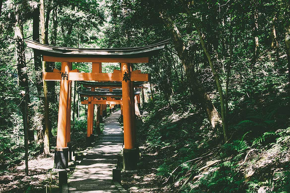torii rouges menant à un sanctuaire shinto, dans la forêt, au Japon