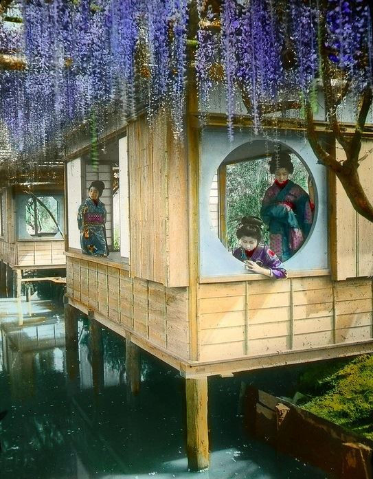 """""""Wisteria over the window, and girls in a resting house"""", Tokyo ~ photographed by T. Enami (1859 -1929), Enami Studio Lantern Slide No.406. (Image: Enami - Gardens & Blossoms, Presbyterian Archives Research Centre, New Zealand)"""