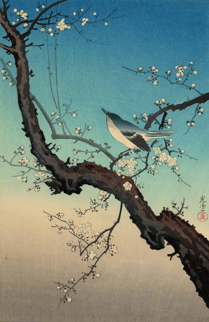 """Estampe de Tsuchiya  Koitsu  土屋光逸intitulée """"Le prunier et la bouscarle chanteuse """" 梅鶯(1940)"""