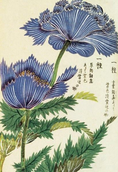 Illustration du Honzo Zufu